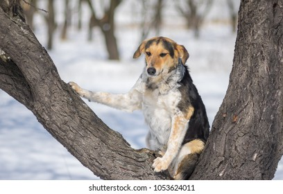 Mixed-breed female dog sitting in the favorite place for resting at winter season - on an apricot tree in orchard