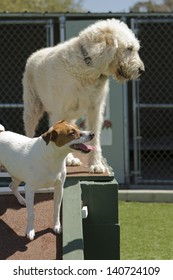 A mixed-breed poodle at a pet boarding facility.