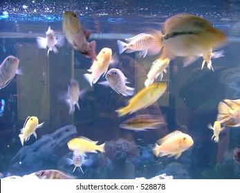 mixture of aqarium fishes