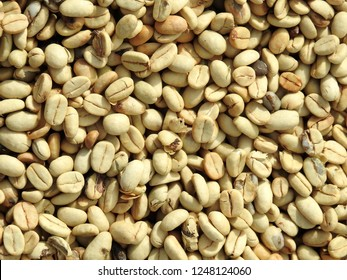 Mixture of different kinds of coffee beans. Coffee Background Costa Rica coffee.