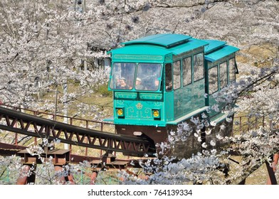 Miyagi, Japan - April 14, 2014: Slope car passing through tunnel of cherry blossom Sakura at Funaoka Castle Ruin Park in Miyagi, Japan.