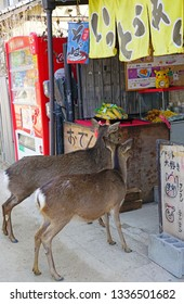 MIYAJIMA, JAPAN -26 FEB 2019- Wild deer roam free on the island of Itsukushima (Miyajima), home to the red floating torii gate to the Itsukushima Shrine. They are a big tourist attraction.