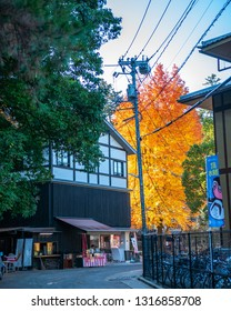 MIYAJIMA, JAPAN - DECEMBER 10, 2016: A street food vendor seen from a distance selling delicious traditional Miyajima treats with a huge ginkgo biloba tree with orange and yellow leaves.