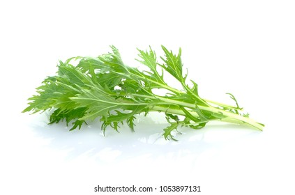 Mizuna, Japanese water vegetable on white background
