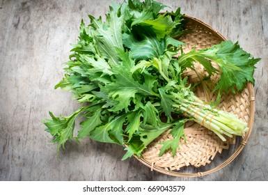 Mizuna lettuce