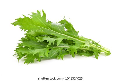 Mizuna lettuce isolated Japanese Mustard, vegetable salad for good health on white background
