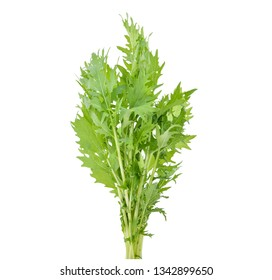 Mizuna lettuce isolated Japanese Mustard, vegetable salad for good health on white background