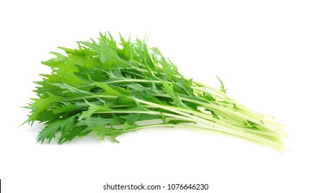 Mizuna lettuce, Japanese Mustard isolated on white background