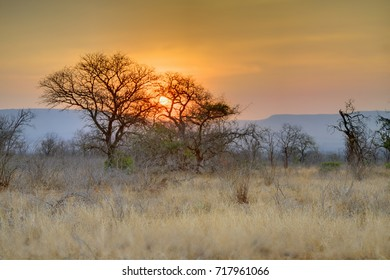 MKUZE SUNSET. Sun sets over Sand Thorn Forest in Zululand, Kwazulu Natal, South Africa