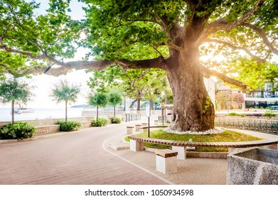 MLINI, CROATIA - JUNE 26, 2015: Beautiful scenes and sights in a small coastal town Mlini, next to Dubrovnik. Old planetree in sunset.