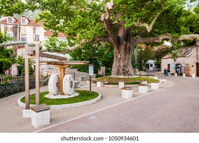 MLINI, CROATIA - JUNE 26, 2015: Beautiful scenes and sights in a small coastal town Mlini, next to Dubrovnik. Old planetree.