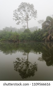 The Moa river to Tiwai Island Wildlife Sanctuary during foggy early morning with mystical mood, Sierra Leone, Africa