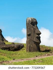 Moai statues on Easter Island. Chile. Rapa Nui. Isla de Pascua.
