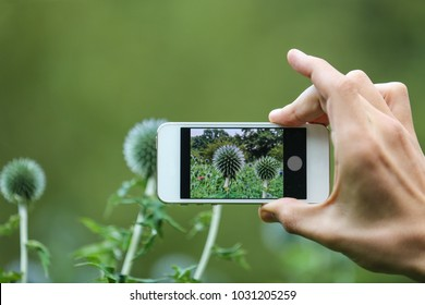 mobile phone in the hand closeup for photographing flowers