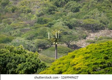 mobile phone LTE cellular antennas in fake tree