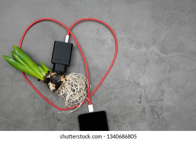 Mobile phone with a red cable charging from a hiacithus flower bulb, ecological