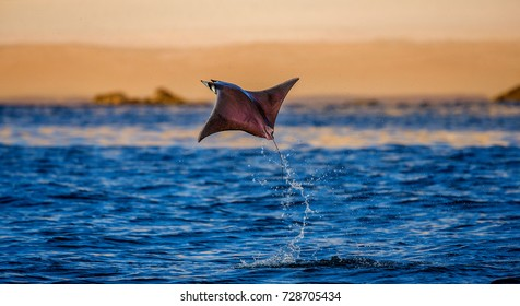 Mobula ray is jumping in the background of the beach of Cabo San Lucas. Mexico. Sea of Cortez. California Peninsula . An excellent illustration.