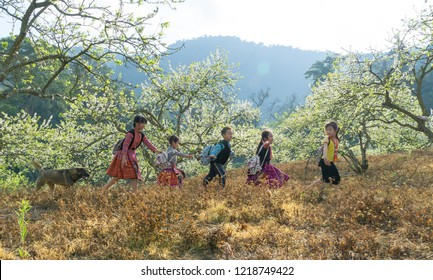 Moc Chau, Vietnam January 26, 2018: When spring arrives, the flowers are blooming, and the children often play alongside the beautiful flowers.