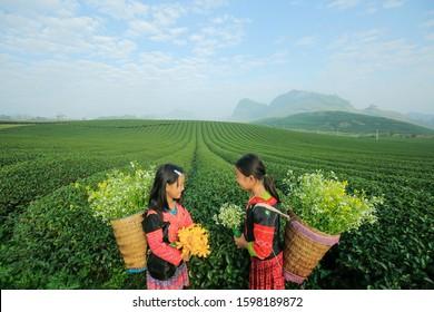Moc Chau, Vietnam November 24, 2019: Ethnic minority children playing on the green tea hill in Moc Chau, Son La, Vietnam.