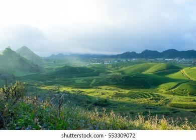 Mocchau highland, Vietnam: Moc Chau tea hill, Moc Chau village . Tea is a traditional drink in Asia