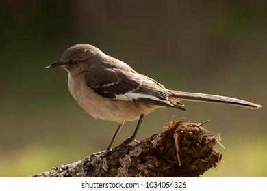 Mockingbird outdoors yard home feeder
