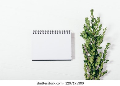 Mock-up blank notepad and green branch, top view. Flatlay composition of empty paper sheet and boxwood twig on white wooden table.