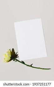 Mockup with blank paper sheet card and yellow flower over beige pastel background with trendy shadow and sunlight. Minimal business brand template. Flat lay, top view