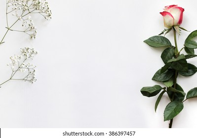 Mockup for presentations with a Rose and Gypsophila. Layout, template for brochure, banner. Blank space for text.