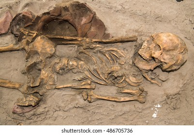 The model  bone Ancient bones unearthed at Khonkaen archaeological site and Dvaravati have 3000 Year old.