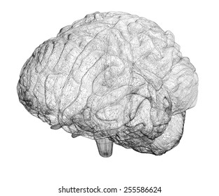 model brain in  projections , body structure, wire model