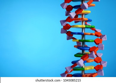 Model of a DNA double helix for genetics or genetic engineering
