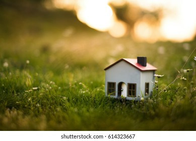 Model house in the meadow with grass and daisies in the evening.
