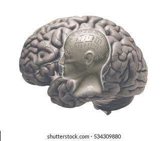 MODEL OF HUMAN BRAIN AND PHRENOLOGY HEAD ON WHITE BACKGROUND