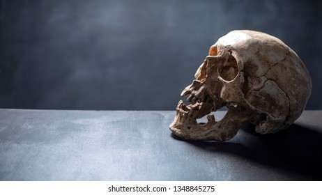 model of human skull on the grey background