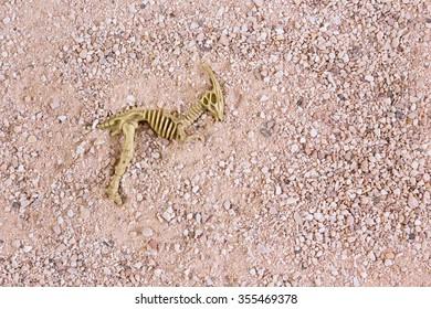 Model parasaurolophus dinosaur skeleton emerging from sandy rocky background