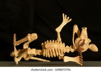 Model of a rat skeleton