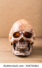 model skull on wooden floor ,wooden background