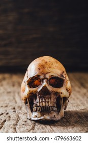 model skull on wooden table