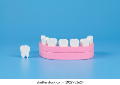 model of teeth for teaching oral hygiene. human jaw model
