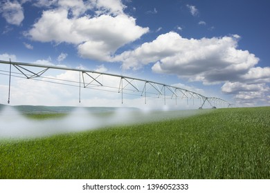 Modern agriculture with irrigation system watering wheat field on a spring day
