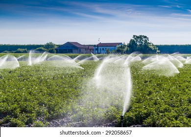 modern agriculture tecniques -  water irrigation of cultivated fields in the countryside in the north of Italy