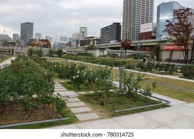 Modern architecture and beautiful rosary at Nakanoshima Park, Osaka, Japan, on November 28th, 2016