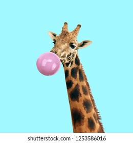 Modern art collage. Concept giraffe with bubble gum on color background. Funny animals.