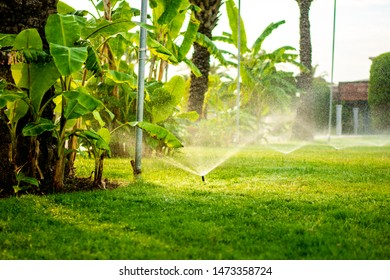 Modern automatic sprinkler working on grass irrigation. Sprinkler system watering the lawn