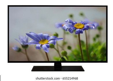 Modern blank flat screen TV set, LCD Television isolated on white background,4K display with picture of beautiful blue flower