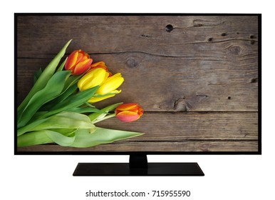 Modern blank flat screen TV set, LCD Television isolated on white background,4K display with tulips on wooden vintage background