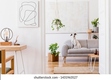 The modern boho interior of open room in cozy apartment with lying dog on the design gray sofa, desk, plants, flowers, wooden and elegant personal accessories.  Mock up paintings concept. Home decor.