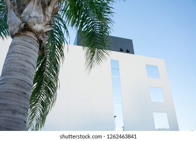 Modern building with palm in Denia Spain