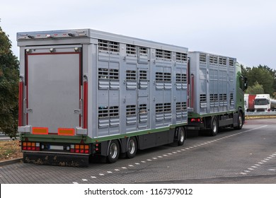 A modern cattle transporter with trailer on its way to the slaughterhouse