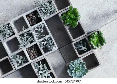 Modern composition with cubical concrete planters and succulents. Split toning and subtle grain.